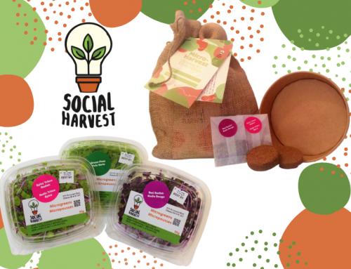 Social Harvest Ottawa